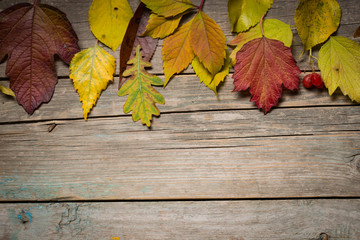 Autumn leaves on wooden boards
