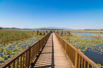Efteni Lake in Summer Day