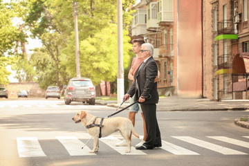 Young man helping blind man with guide dog on pedestrian crossing