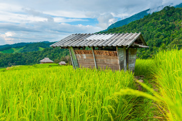 Small cottages among natural lush green Rice Terrace in Chiang-mai, Thailand