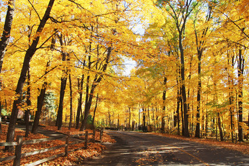 Autumn nature background. Colors of the autumn at medwest USA. Fall landscape with a rural road across a golden woods. Horizontal shot.