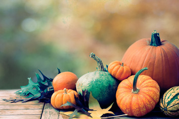 Fall Thanksgiving Harvest of Pumpkins and Gourds in still life display with Golden Autumn Leaves Blur Background with room or space for copy, text, words.  Horizontal with cross process for mood