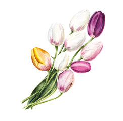 Tulips. Wedding drawings. Greeting cards. Flower backdrop. Hand drawn watercolor illustration.