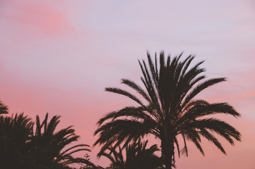 Palm tree silhouettes against colorful sunset sky