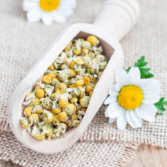 Dry chamomile tea in wooden scoop, fresh chamomile flowers on background, square format