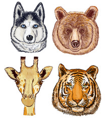 Animals set. Giraffe, bear, dog, tiger. Hand drawn wild animals face set. Giraffe, bear, dog, tiger vector