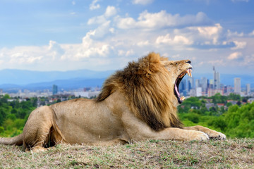 Wall Mural - Lion with the city of on the background
