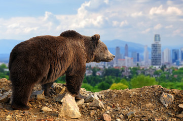 Bear with the city of on the background