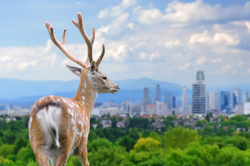 Deer with the city of on the background