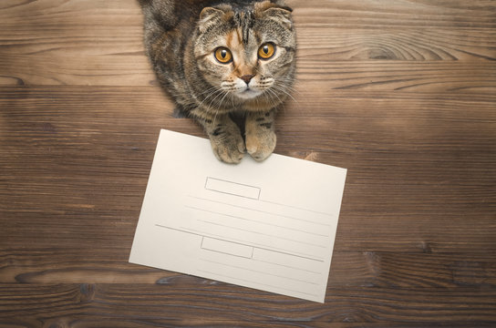 Paper envelope and joyful cat on wooden table background.