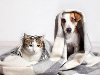 Pies i kot pod szkocką kratą