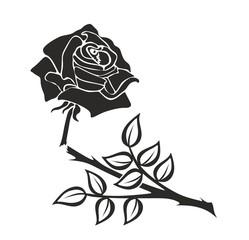 rose0210a