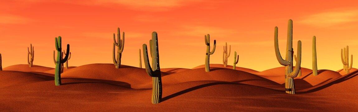 American Desert, cacti in the sand