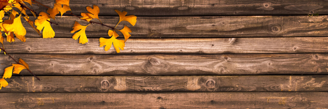 Autumnal wooden panoramic background with ginkgo biloba leaves, autumn concept
