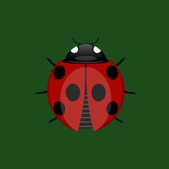 Summer Ladybug Icon