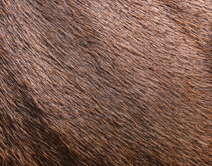 brown cowhide wool
