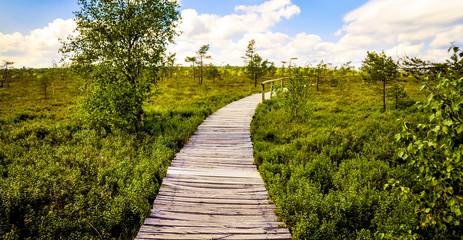 Der Weg am Schwarzen Moor