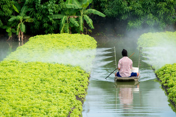 farmer spraying insecticides in the lettuce field from mini boat without protection suit..