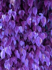 The texture of decorative foliage is of classical shape. Cold-violet color scheme