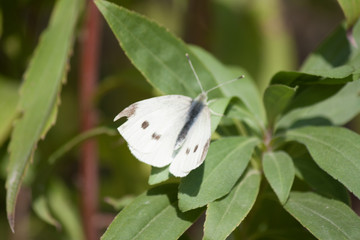 white butterfly on grass