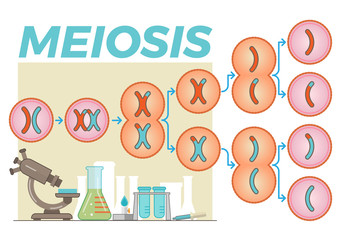 Schematic illustration with meiosis cell division process and various lab objects in the background