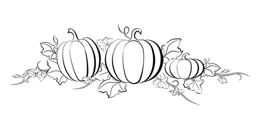 Pumpkin vector drawing set