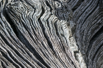 wooden trunk, abstract detail