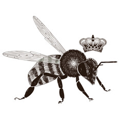 Bee and crown set drawing