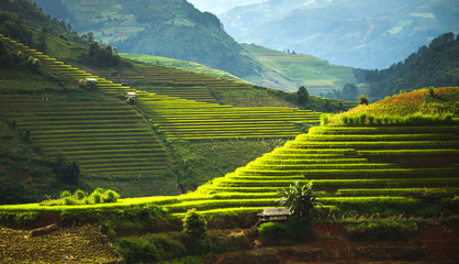 Self adhesive Wall Murals Rice fields World heritage Ifugao rice terraces