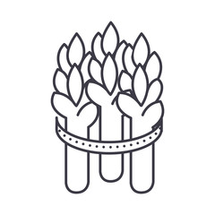 asparagus vector line icon, sign, illustration on white background, editable strokes