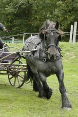 Door stickers Horses Mooi tinker paard in galop