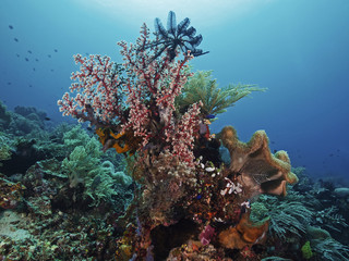 Different corals in the tropical sea