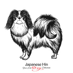 Japanese Hin. Black and white graphic drawing of a dog.