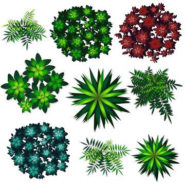 collection of top view plants (tree, shrub, subshrub, palm,aloe)