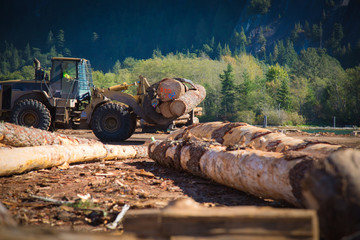 Heavy duty machine industrial forestry logger mountain landscape sunny day