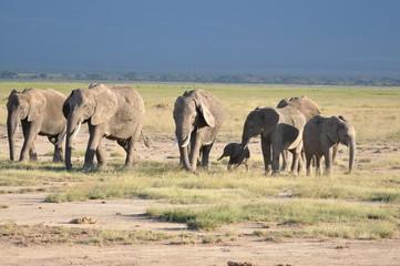 The African animals. Kenya