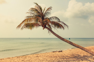 palm tree on empty beach - one palm tree on oceach with ocean background