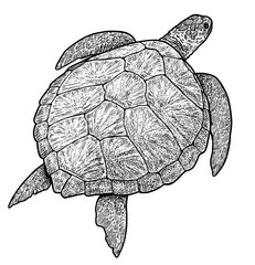 Green sea turtle illustration, drawing, engraving, ink, line art, vector
