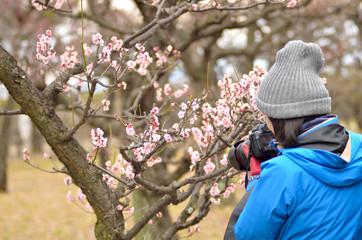 梅の花を撮る女性