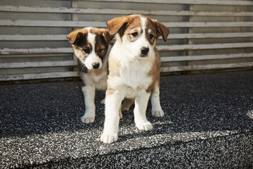 Two sister puppies