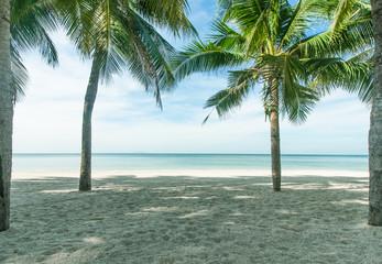 Coconut plams on the beach