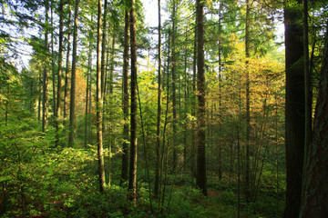 a picture of an Pacific Northwest forest in fall