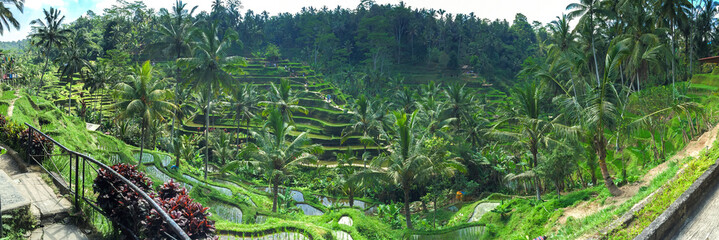 Panorama of Beautiful rice terraces in the morning at Tegallalang village, Ubud, Bali, Indonesia.