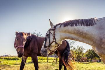 Horses speaking together.