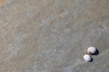 Décors texture pierre et coquillage Orkney background