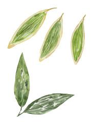 笹の葉 水彩イラスト