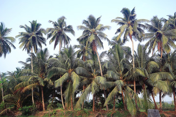 palms sky tropical travel background