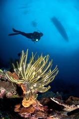Indonesia, Lesser Sunda Islands, West Nusa Tenggara, Gili Islands, Gili Trawangan