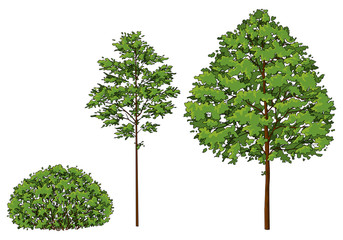Cartoon trees and bush. A set of images.
