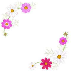 Flowers of cosmos. Beautiful floral illustration. Frame. Wild flowers. Border. White and pink inflorescences. Spring. Summer. Leaves. Petals. Buds.